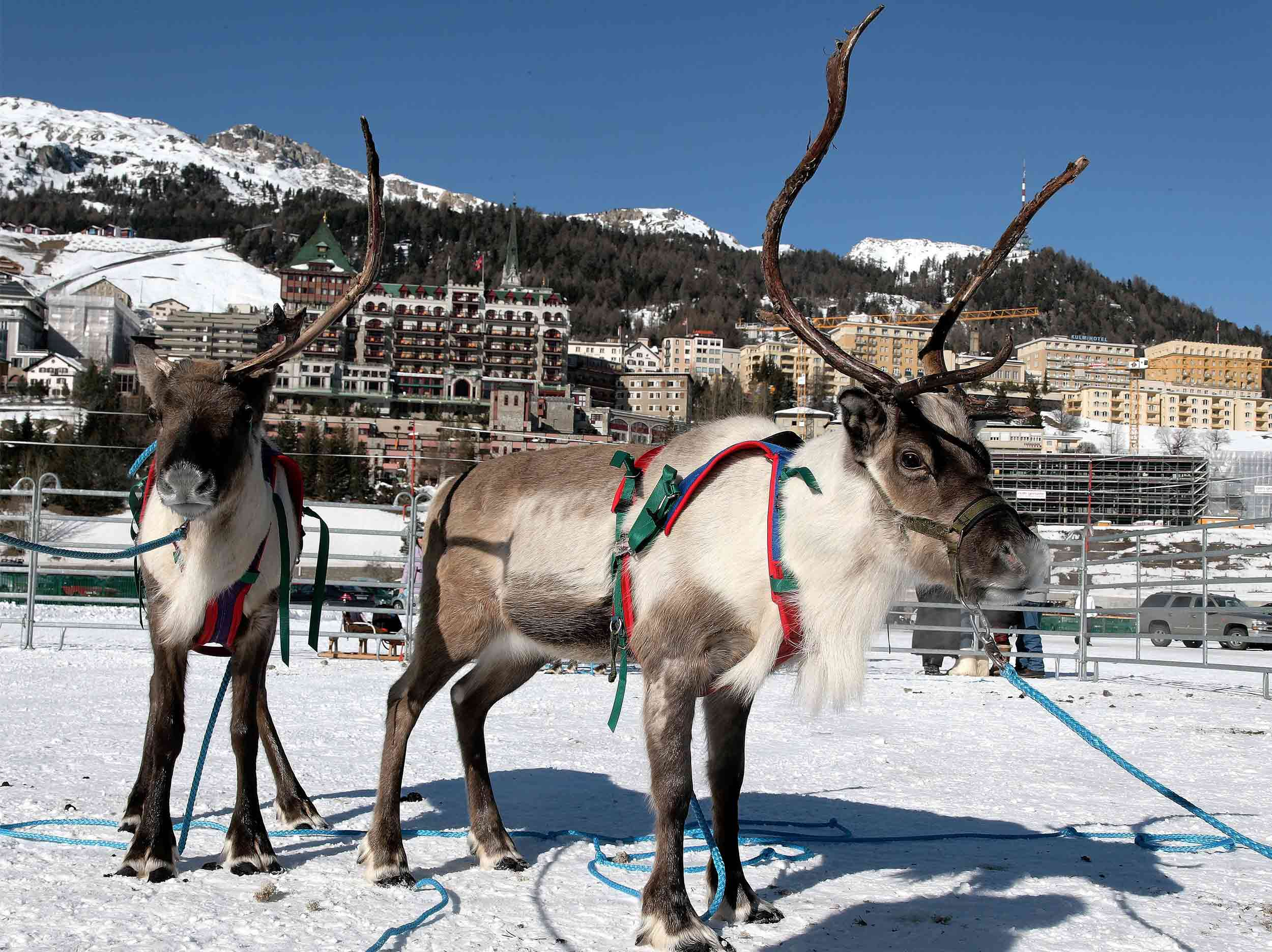 Credit Suisse – Skikjöring at White Turf in St. Moritz